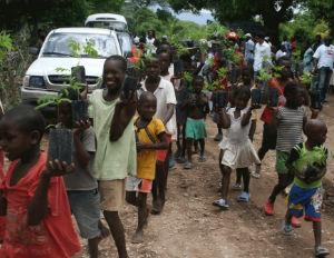 haiti trees